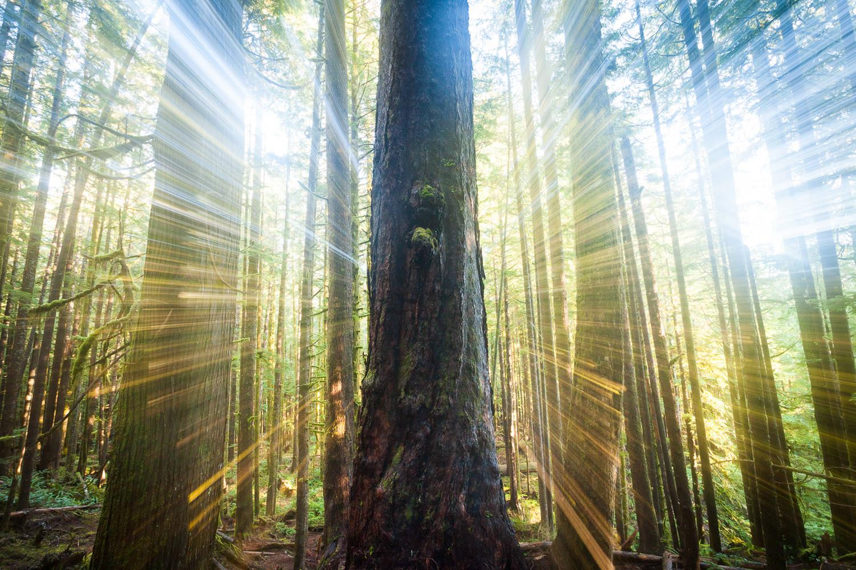 avatar-grove-light-rays-tj-watt.jpg