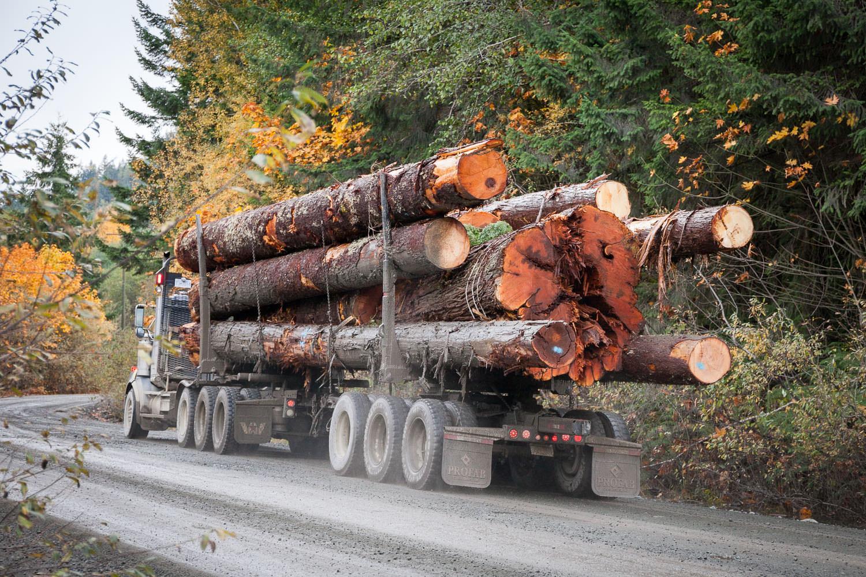walbran-valley-big-log-truck.jpg