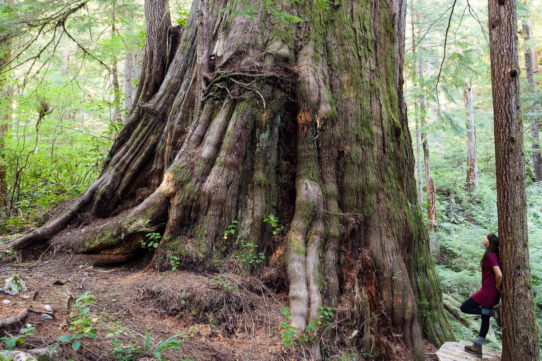 walbran-valley-castle-giant-tree.jpg