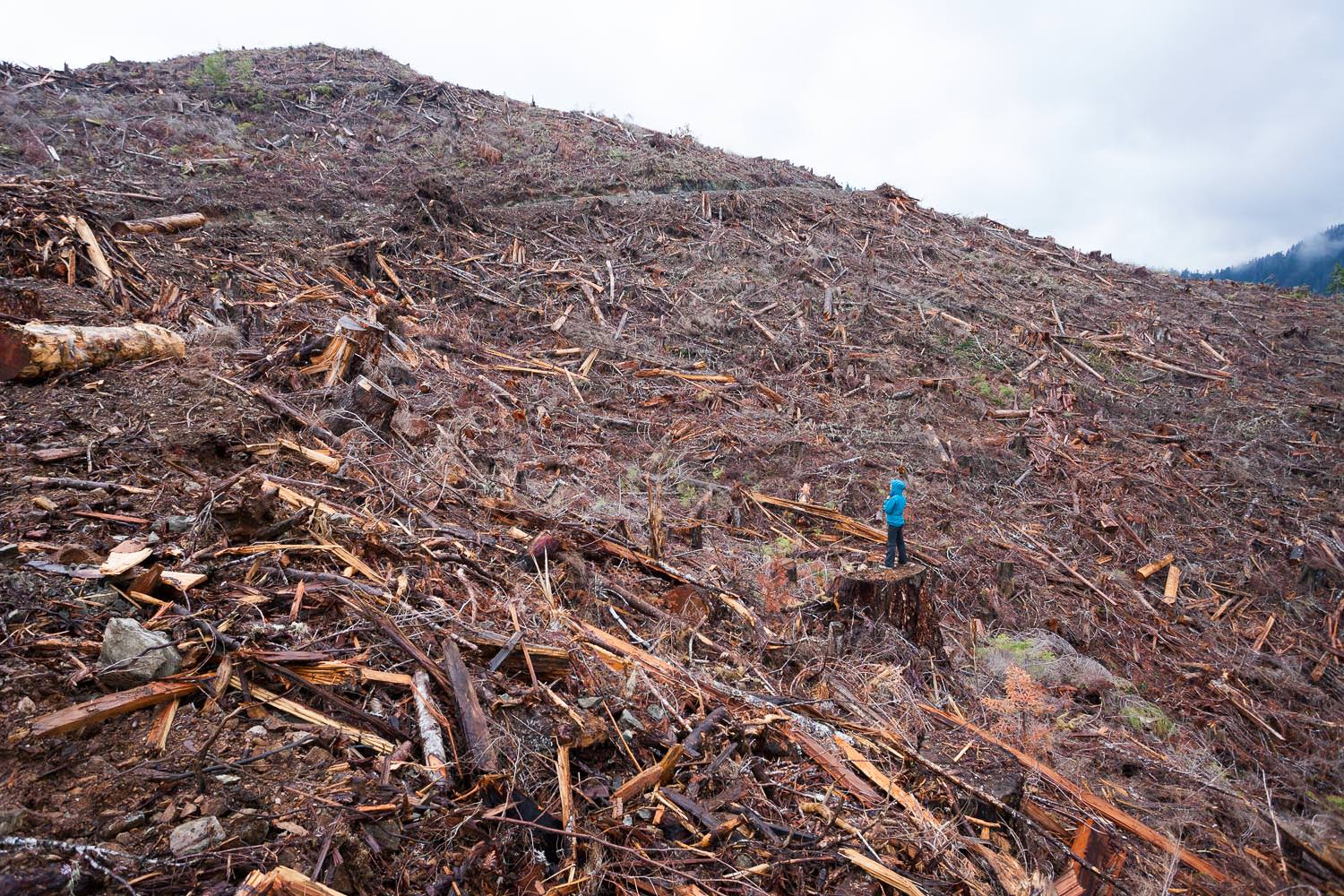walbran-valley-clearcut-with-person.jpg