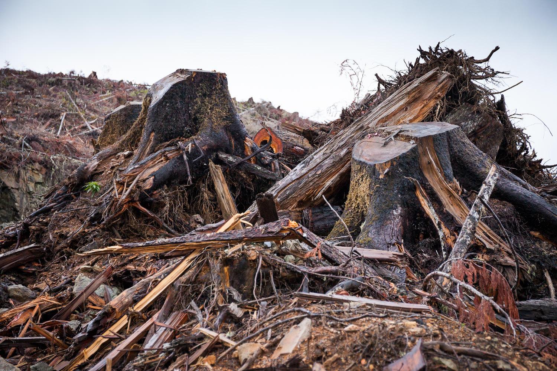 walbran-valley-logging-slash-stumps.jpg