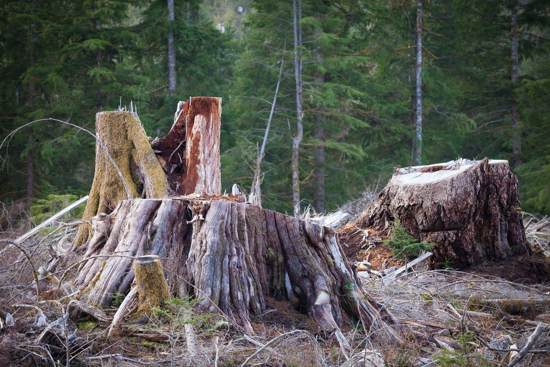 big-stumps-vancouver-island-bc.jpg