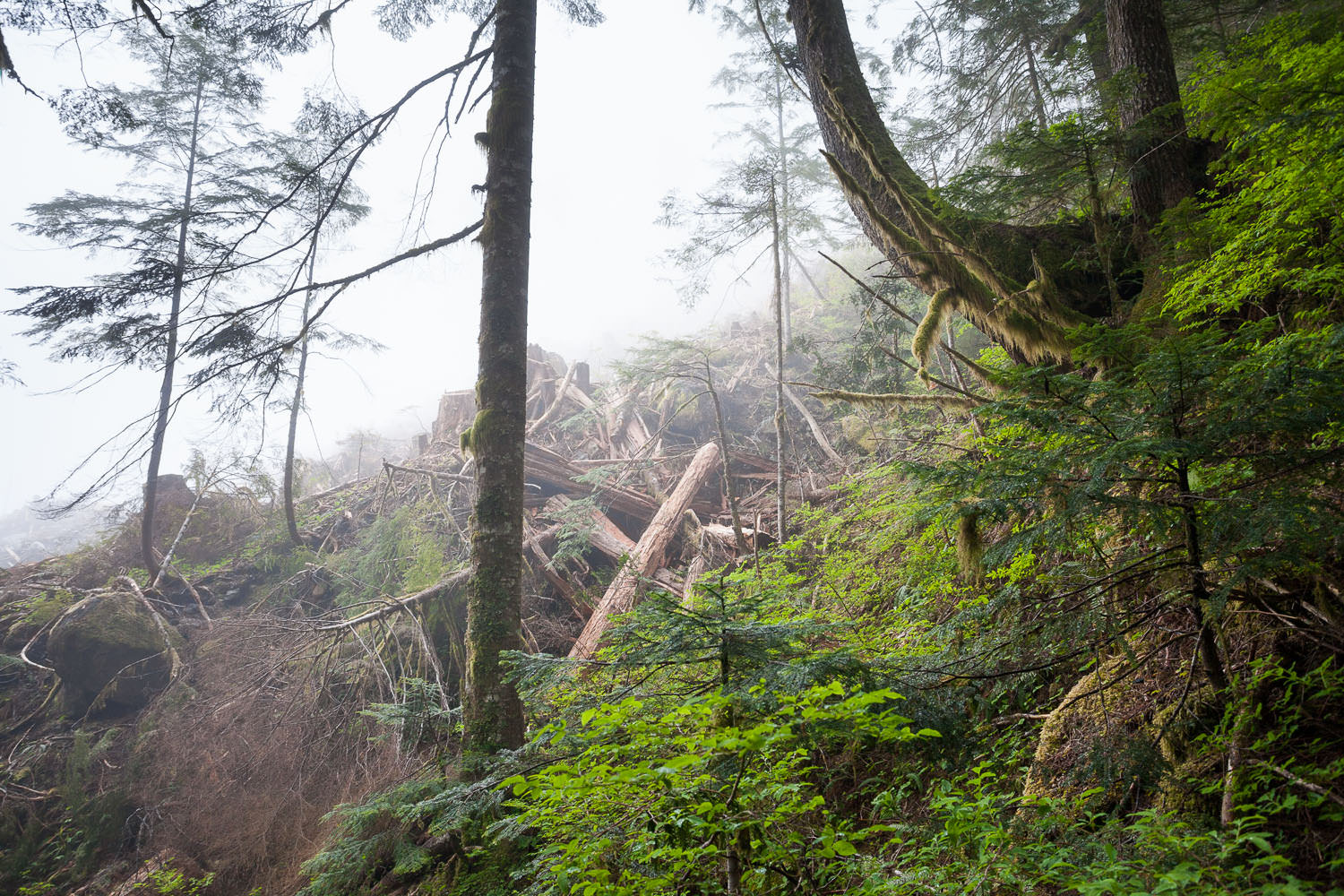 clearcut-vs-intact-ancient-forest.jpg
