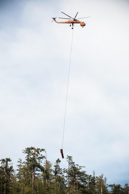 heli-logging-carrying-tree.jpg