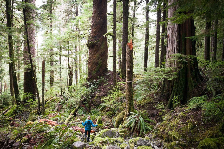 hiking-port-renfrew-ancient-forest-trees.jpg