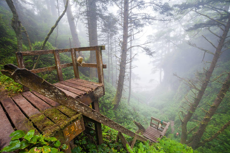 west-coast-trail-ladders-mist.jpg