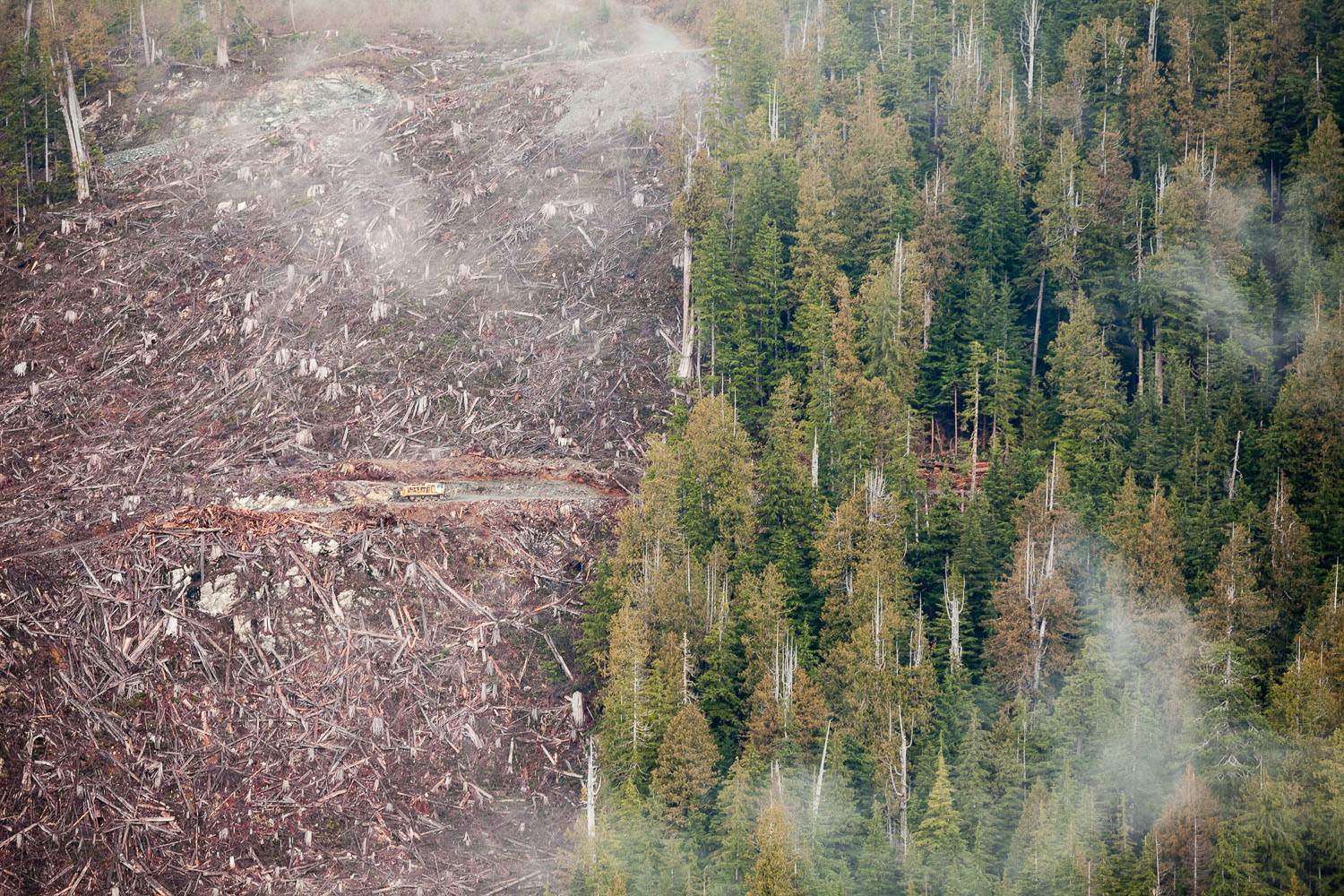 clearcut-vs-old-growth-forest-klanawa-valley.jpg