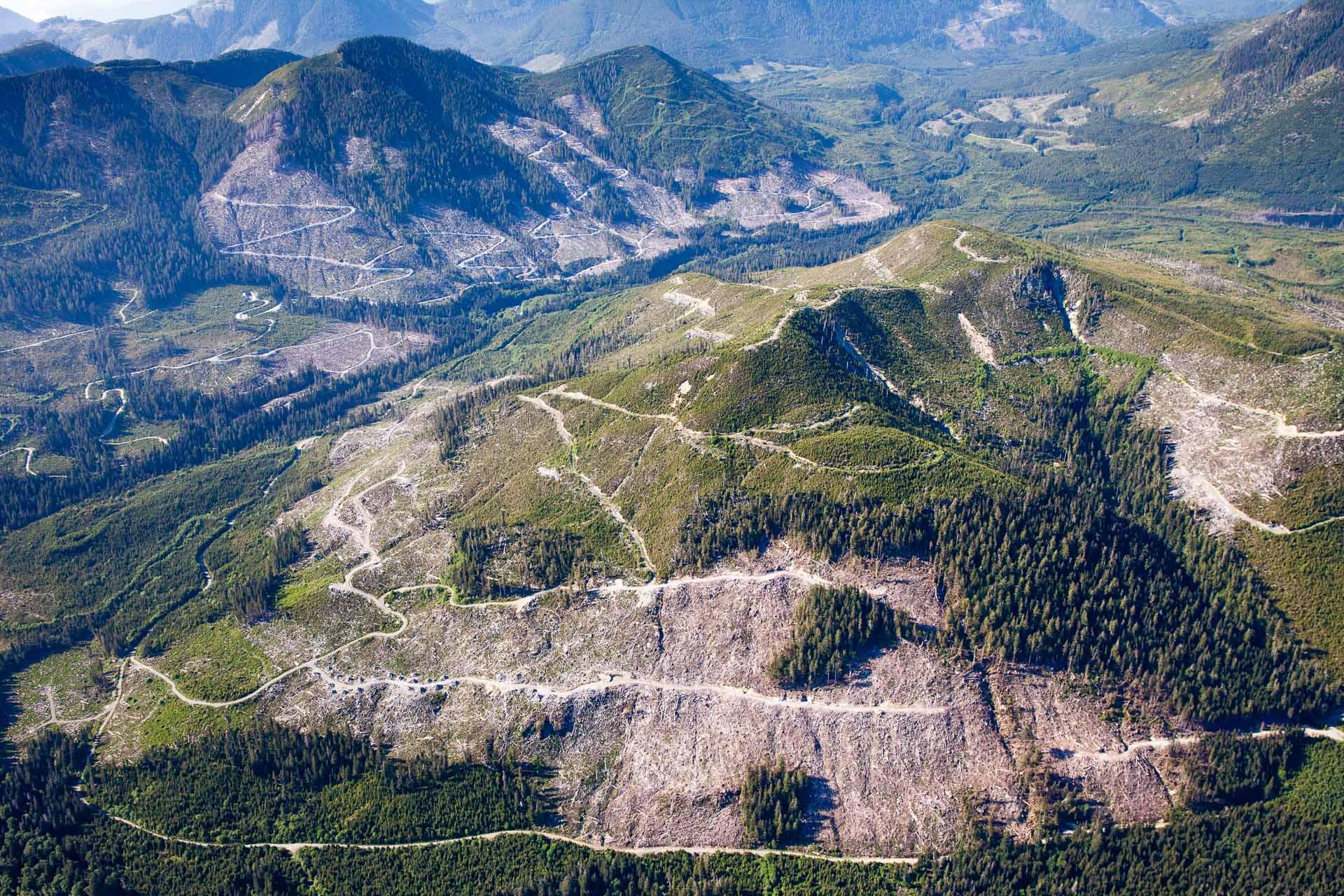 klanawa-clearcut-logging-tfl-44.jpg