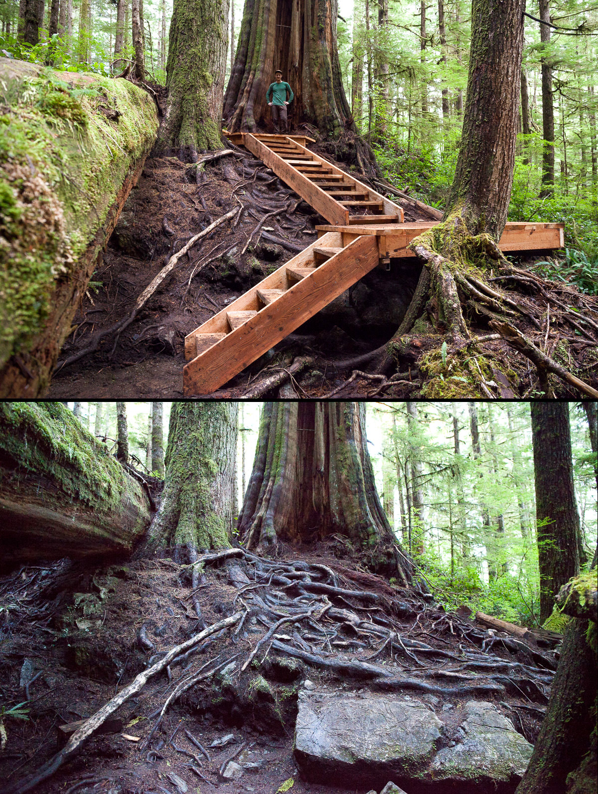 Before-After-Stairs-Bottom.jpg
