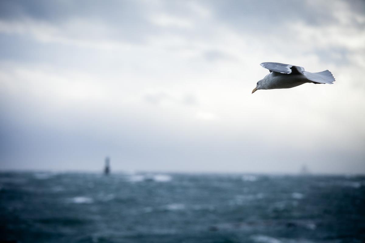 wind-storm-victoria-bc-tj-watt-138.jpg