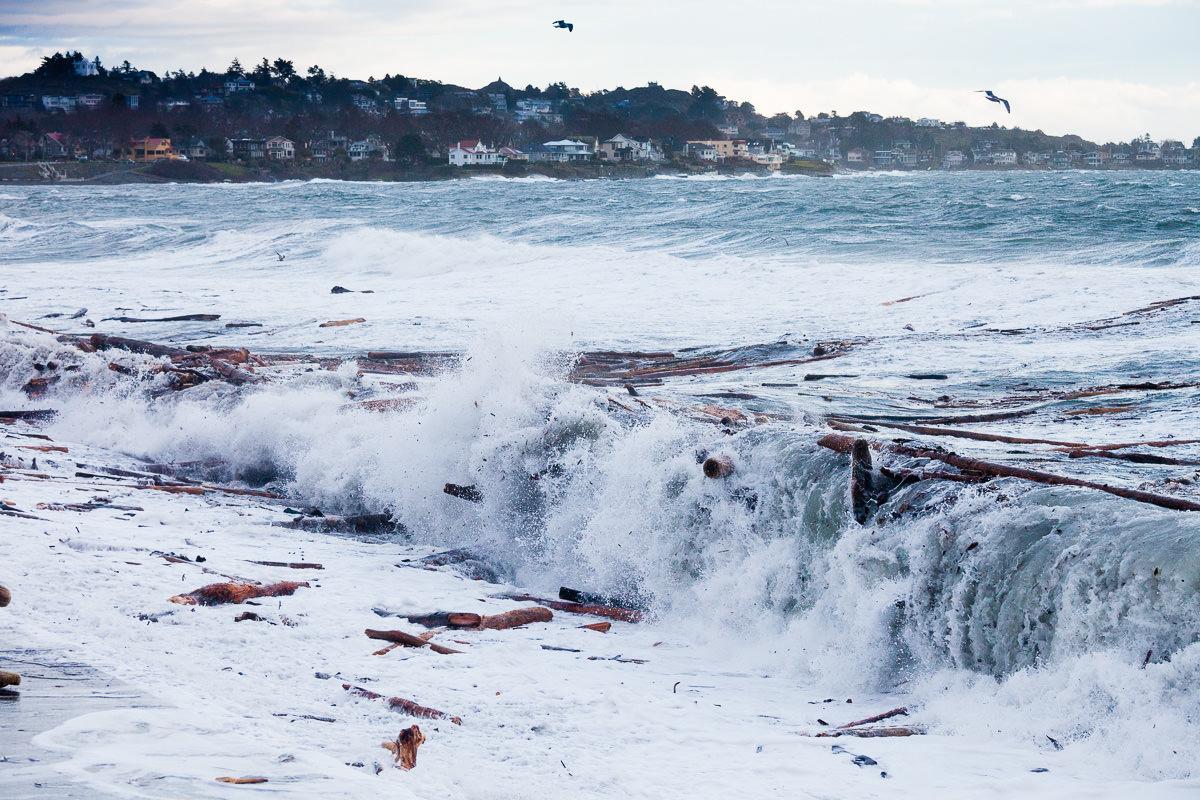 wind-storm-victoria-bc-tj-watt-358.jpg