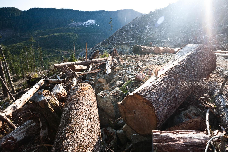 gordon-river-logging-debris-bugaboo.jpg