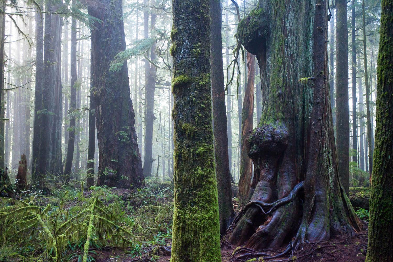 avatar-grove-big-trees-fog-3.jpg