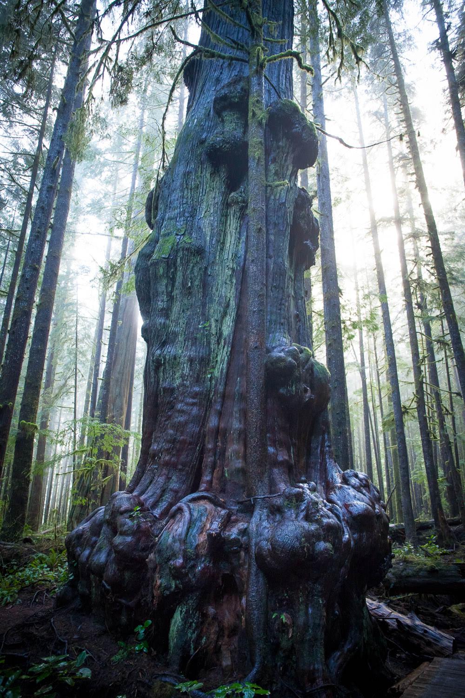 avatar-grove-big-trees-fog-6.jpg