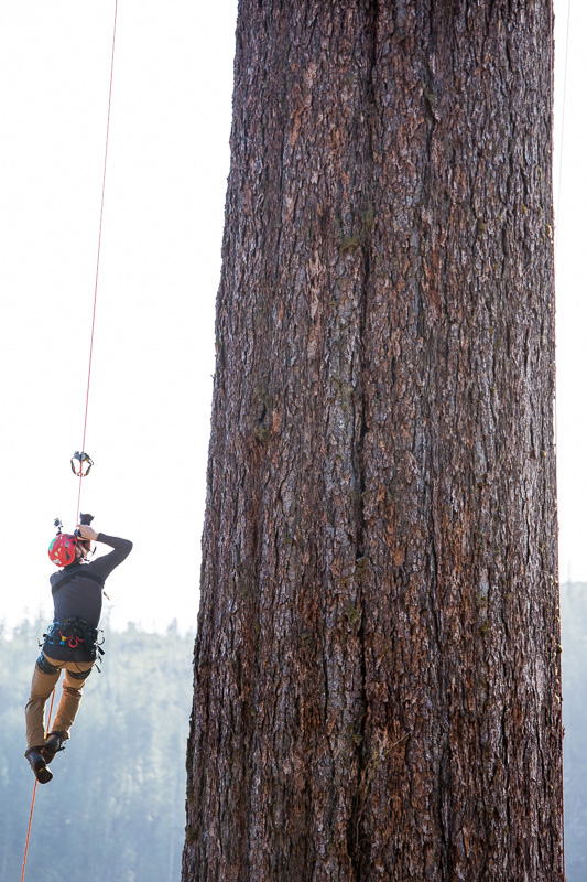 Getting some shots while looking up the massive trunk!  Photo: James Frystak.