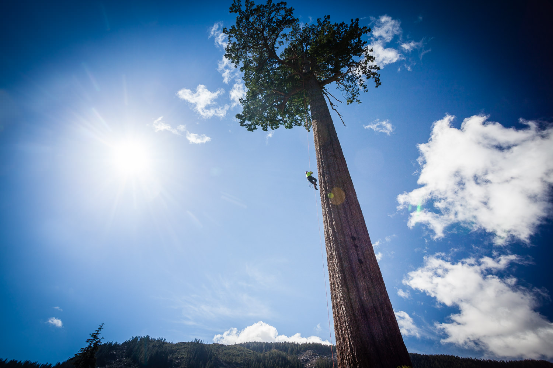 big-lonely-doug-tree-climb-2016-7.jpg