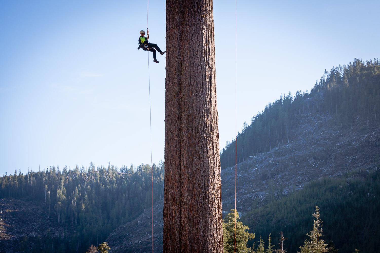 big-lonely-doug-tree-climb-2016-14.jpg