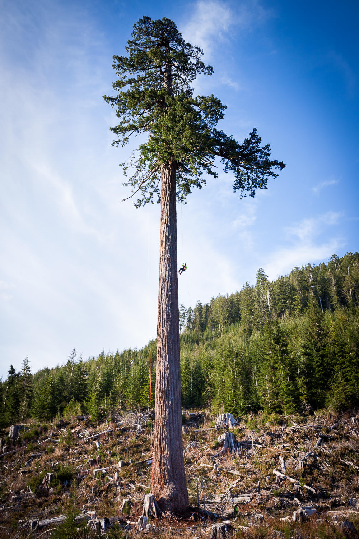 big-lonely-doug-tree-climb-2016-17.jpg
