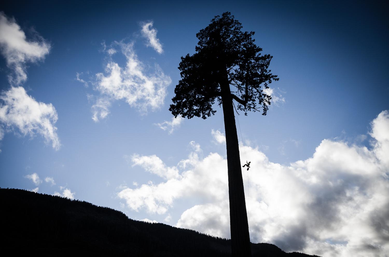 big-lonely-doug-tree-climb-2016-2.jpg