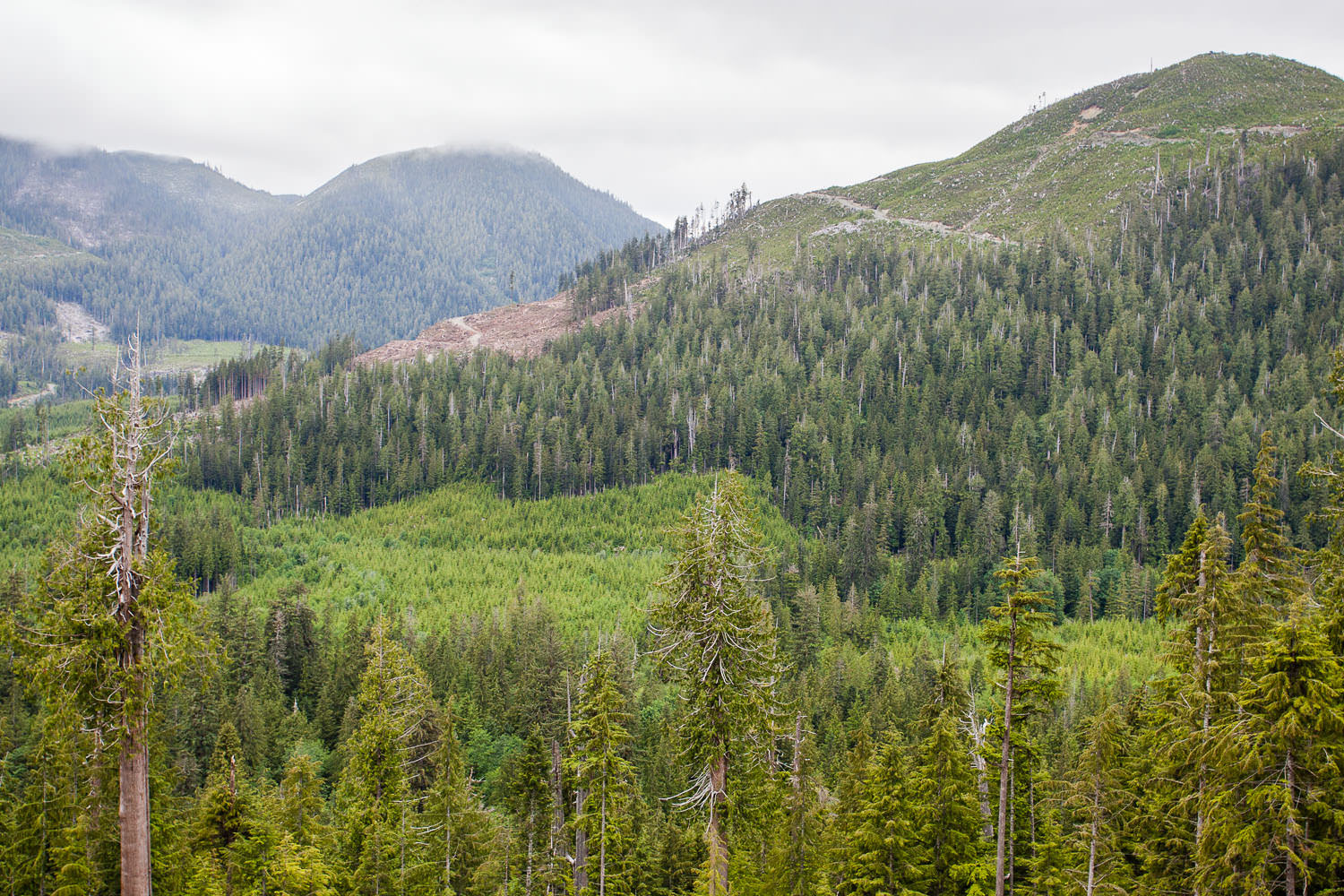 klanawa-valley-old-growth-forest-before.jpg