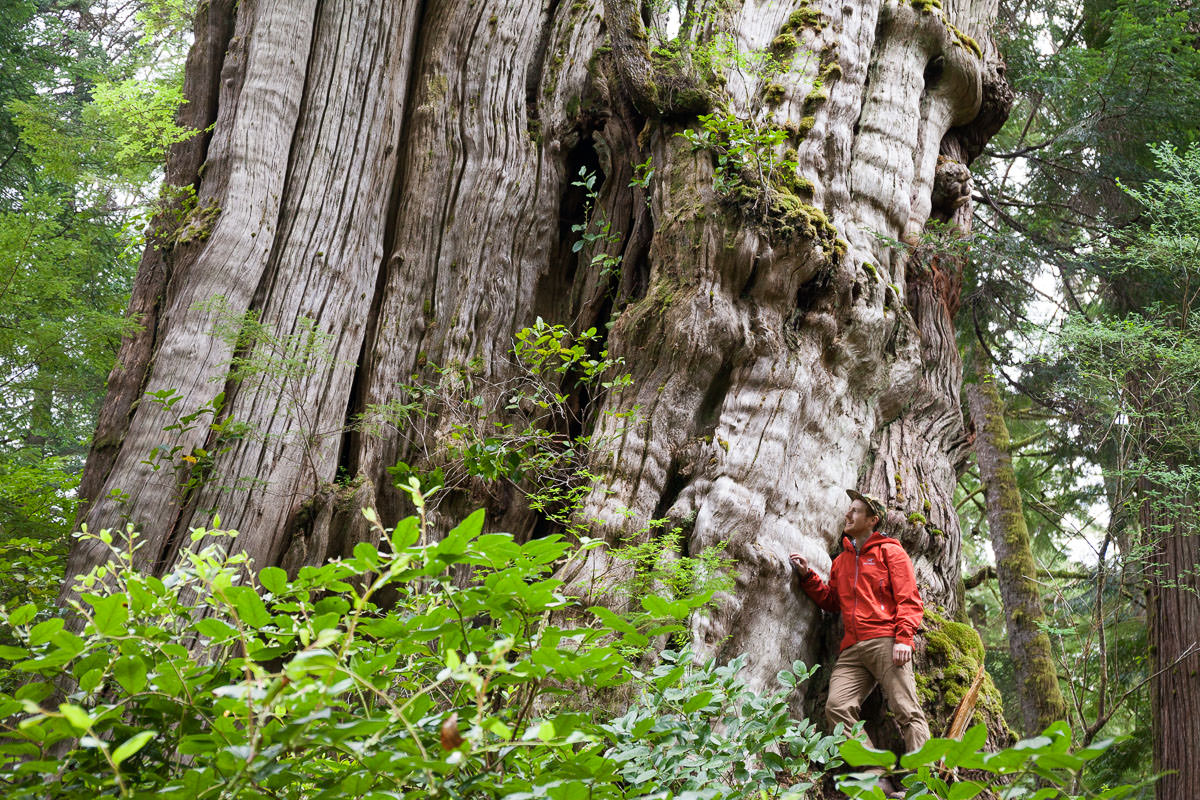 I can still barely comprehend the size of this enormous tree. As the third largest known redcedar, it measures nearly 20 feet in diameter! This was my first time visiting it and the remote north end of Cheewhat Lake. It's a bit of a bushwhack, but so worth the journey!!