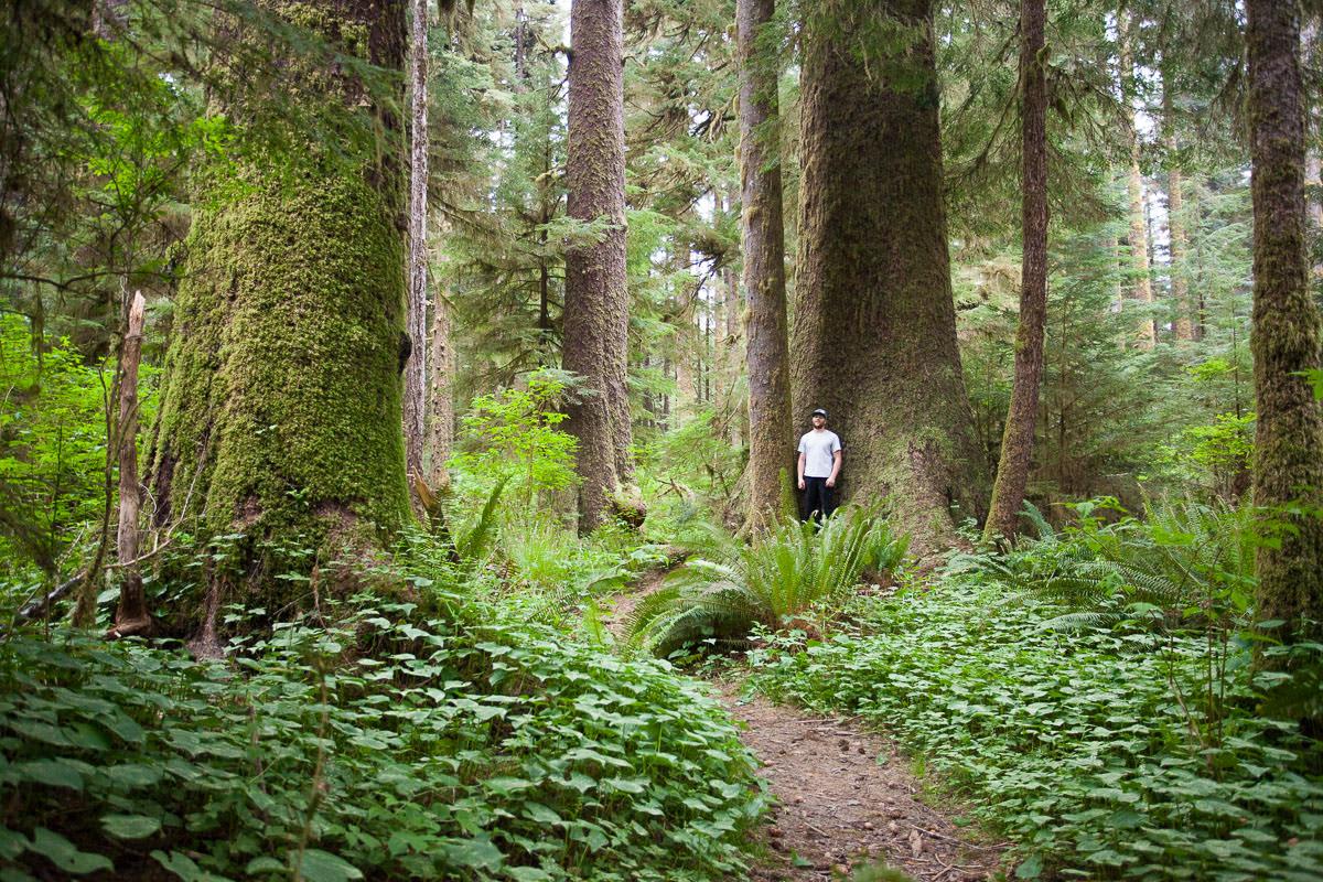 Stoltmann Grove - Carmanah Valley.