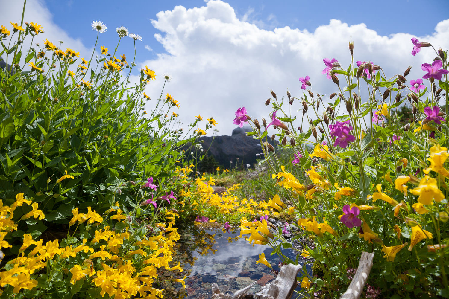 50-40-Peak-Wildflowers.jpg
