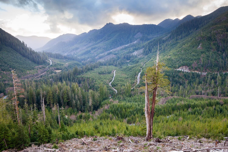 klanawa-valley-cedar-tree-clearcut.jpg