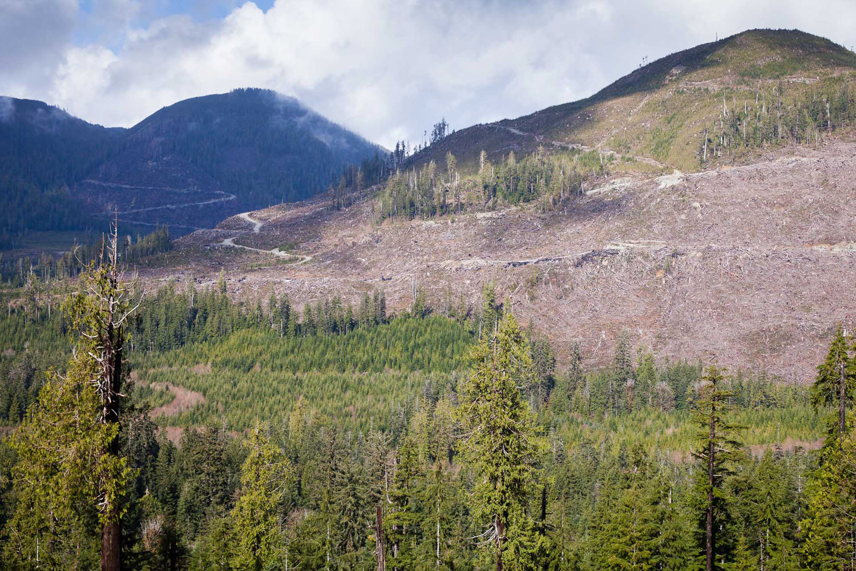 klanawa-valley-clearcut-after-logging.jpg