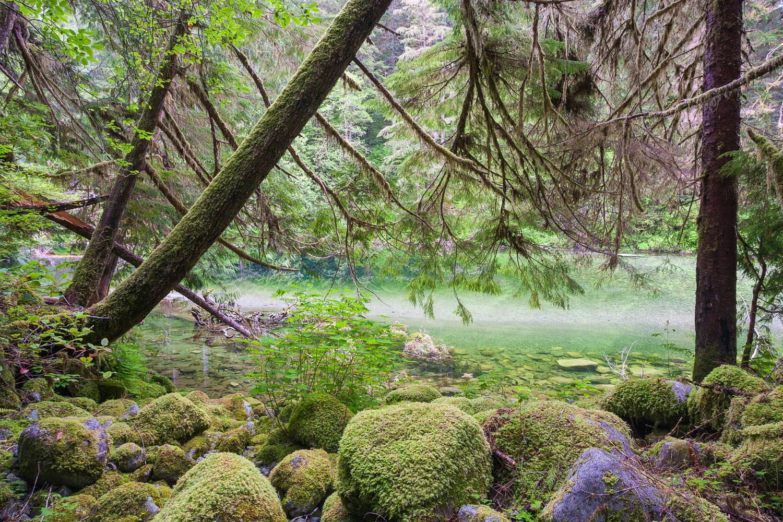 walbran-valley-emerald-pool.jpg