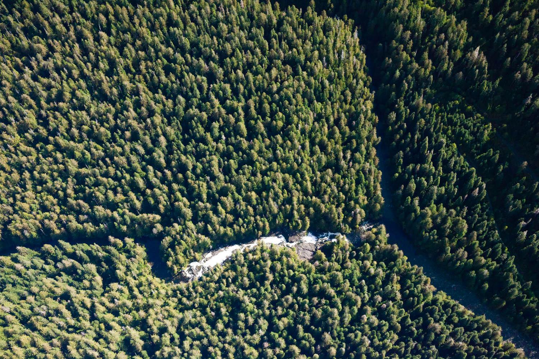 castle-grove-walbran-valley-aerial.jpg