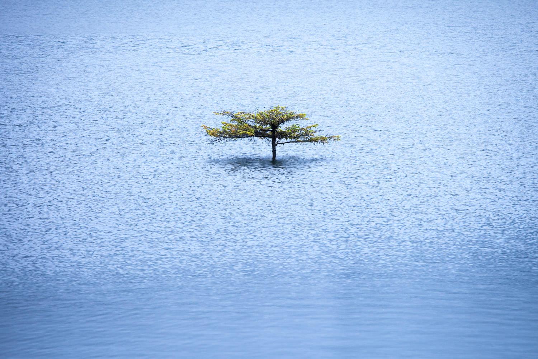 fairy-lake-tree-under-water-winter.jpg