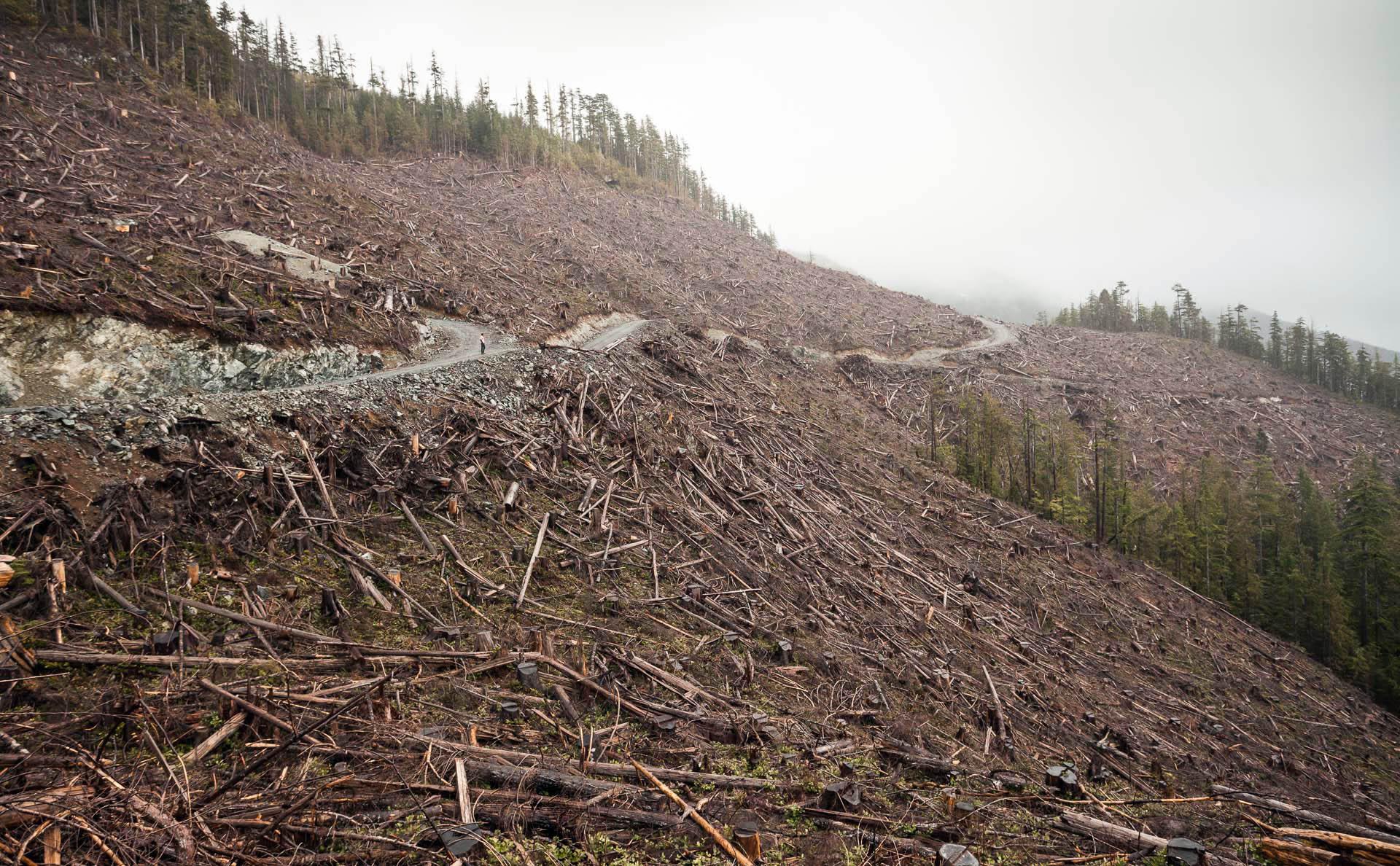 clearcut-logging-road-port-renfrew.jpg