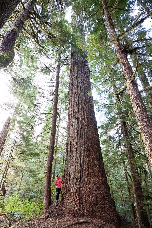 nahmint-valley-ancient-douglas-fir-tree.jpg