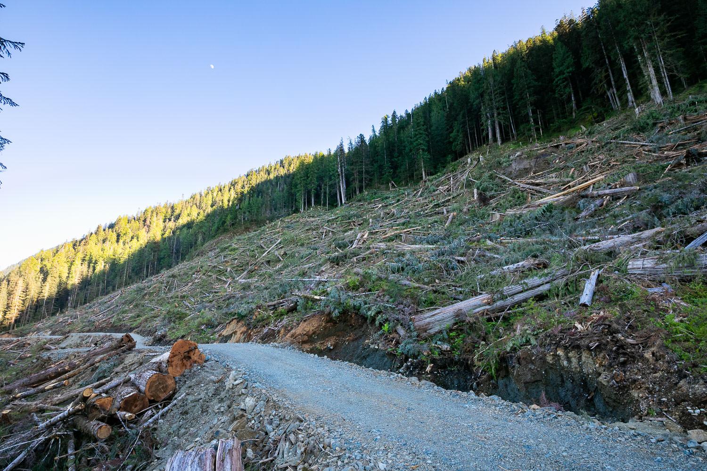 nahmint-valley-clearcut-logging-2018.jpg