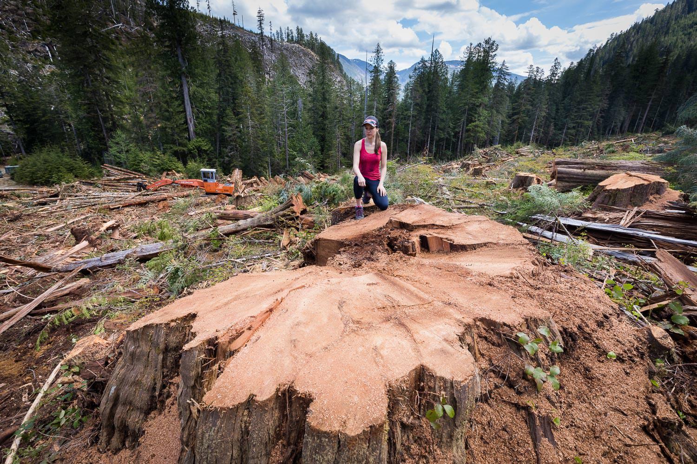 nahmint-valley-huge-cedar-stump-ariane.jpg