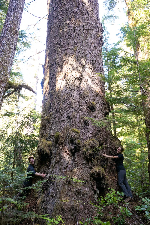 nahmint-valley-hugging-douglas-fir-tree.jpg