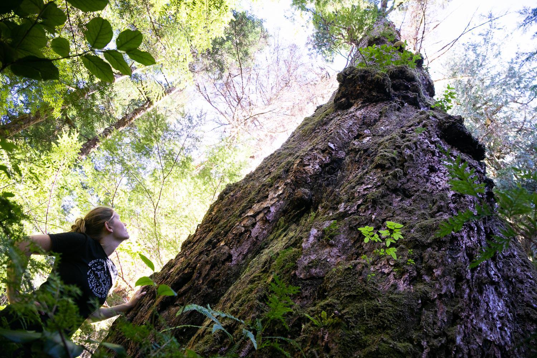 nahmint-valley-huge-douglas-fir-tree.jpg