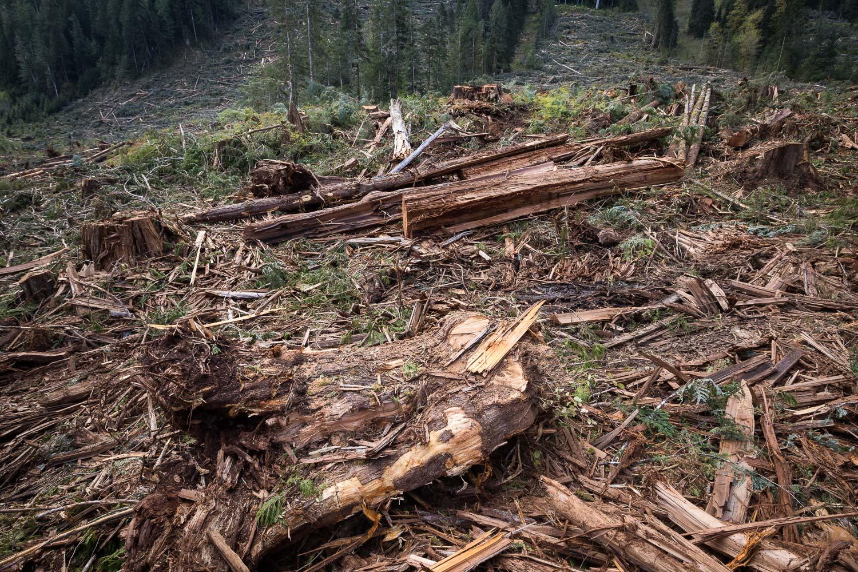 nahmint-valley-logging-slash-debris.jpg