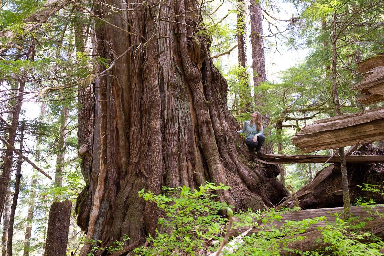 nahmint-valley-massive-old-growth-redcedar-tree-2.jpg