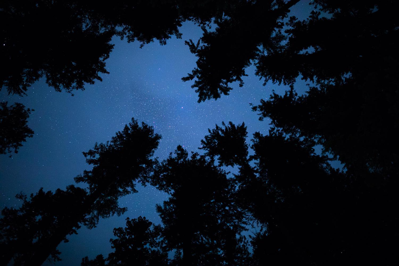 nahmint-valley-starry-sky-night-tree-canopy.jpg