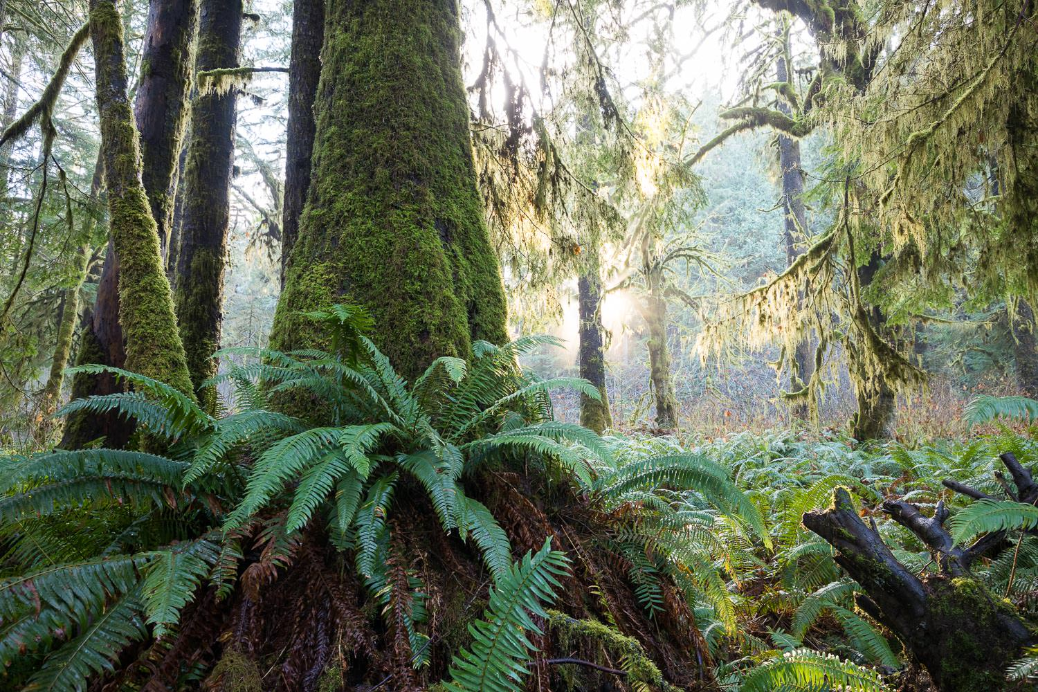 fern-gully-grove-spruce-port-renfrew.jpg