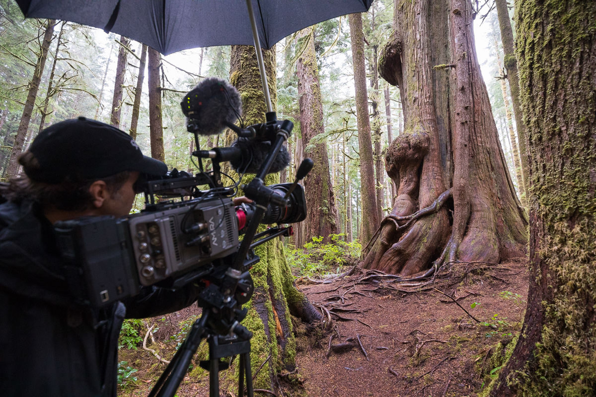 Cinematographer Nicholas de Pencier filming in Avatar Grove near Port Renfrew.