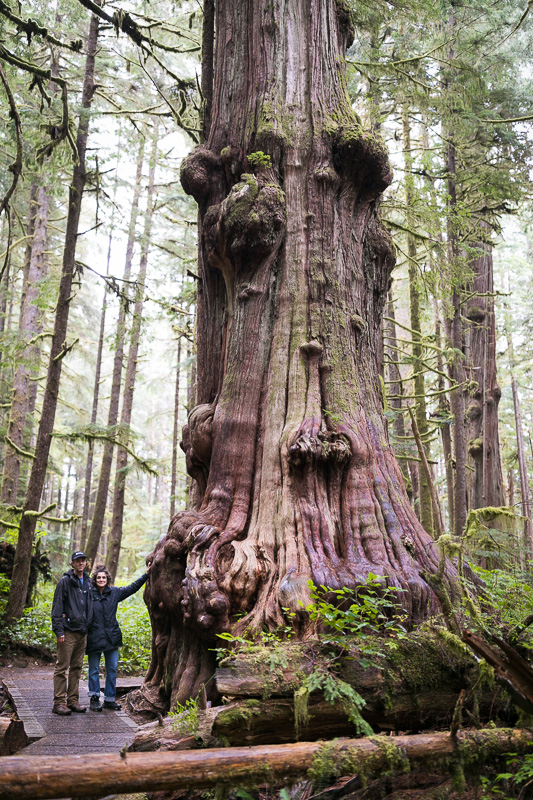 Nicholas  de Pencier and Jennifer Baichwal stand beside a monumental western redcedar in Avatar Grove near Port Renfrew on Vancouver Island.