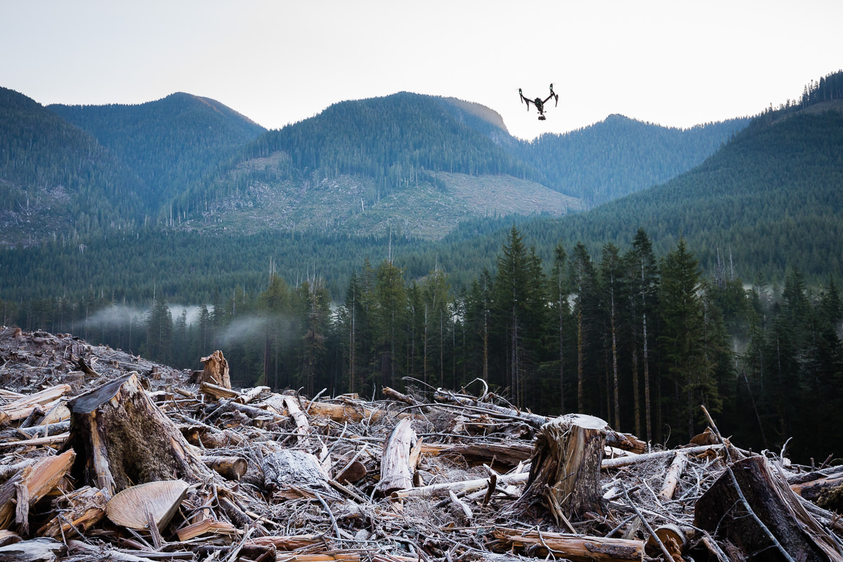 Gathering drone footage of an old-growth forest clearcut on Edinburgh Mountain near Port Renfrew.