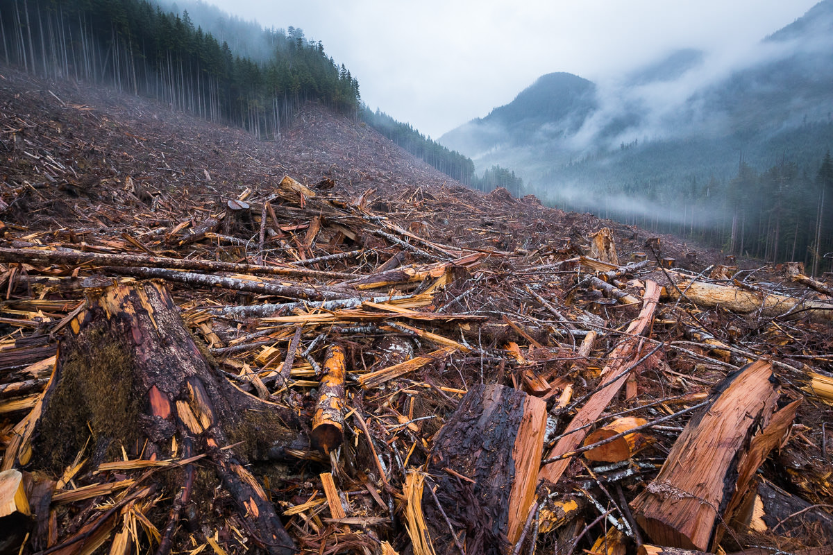 An old-growth forest clearcut on Edinburgh Mountain near Port Renfrew featured in the documentary.