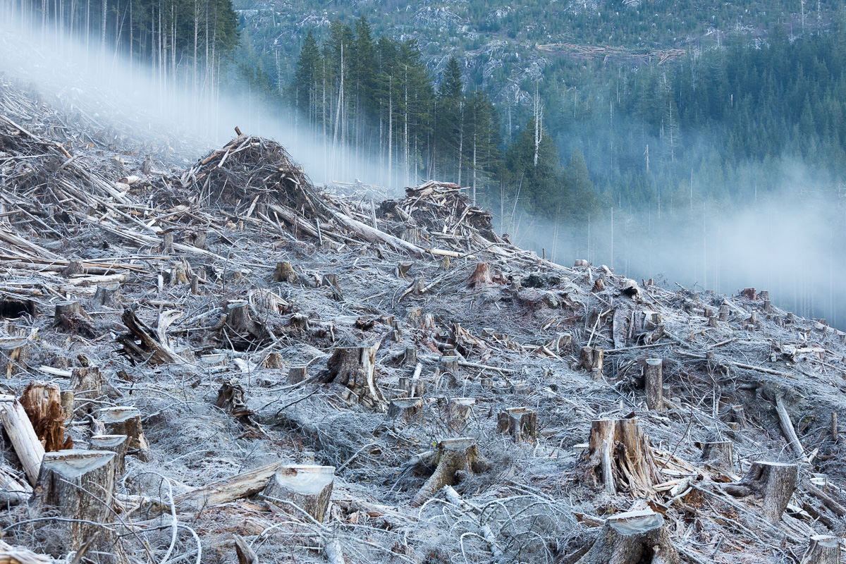 Early morning mist drifts over a frosty old-growth clearcut featured in the film.