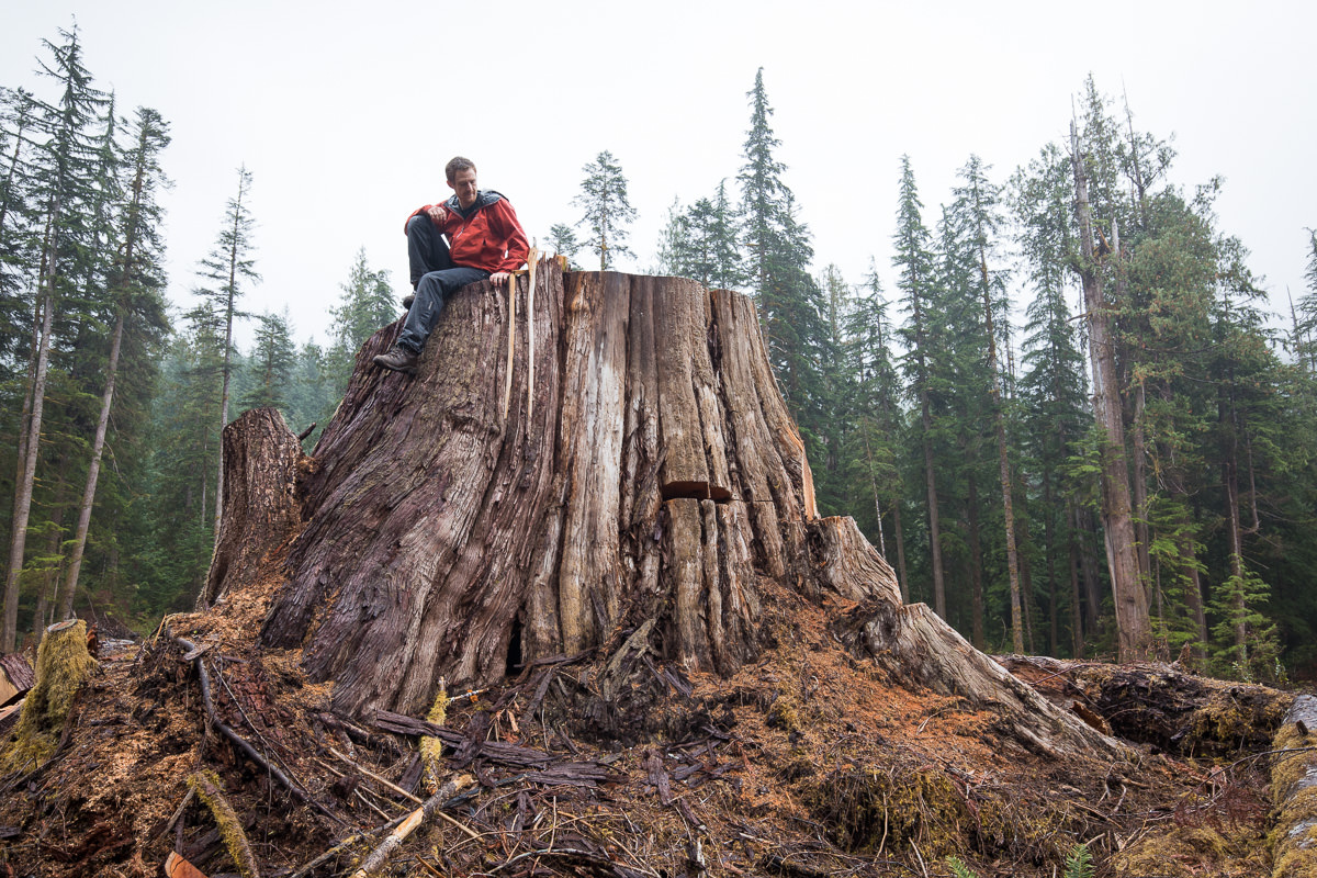 Sitting atop a giant old-growth redcedar stump in a clearcut near Port Renfrew that was featured in the film.