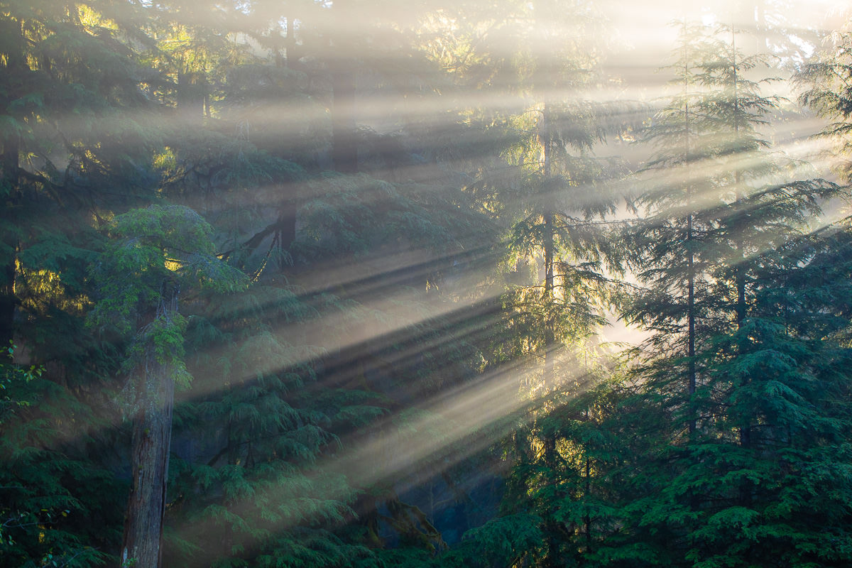 Loss-Creek-Port-Renfrew-JDF-Light-Rays.jpg