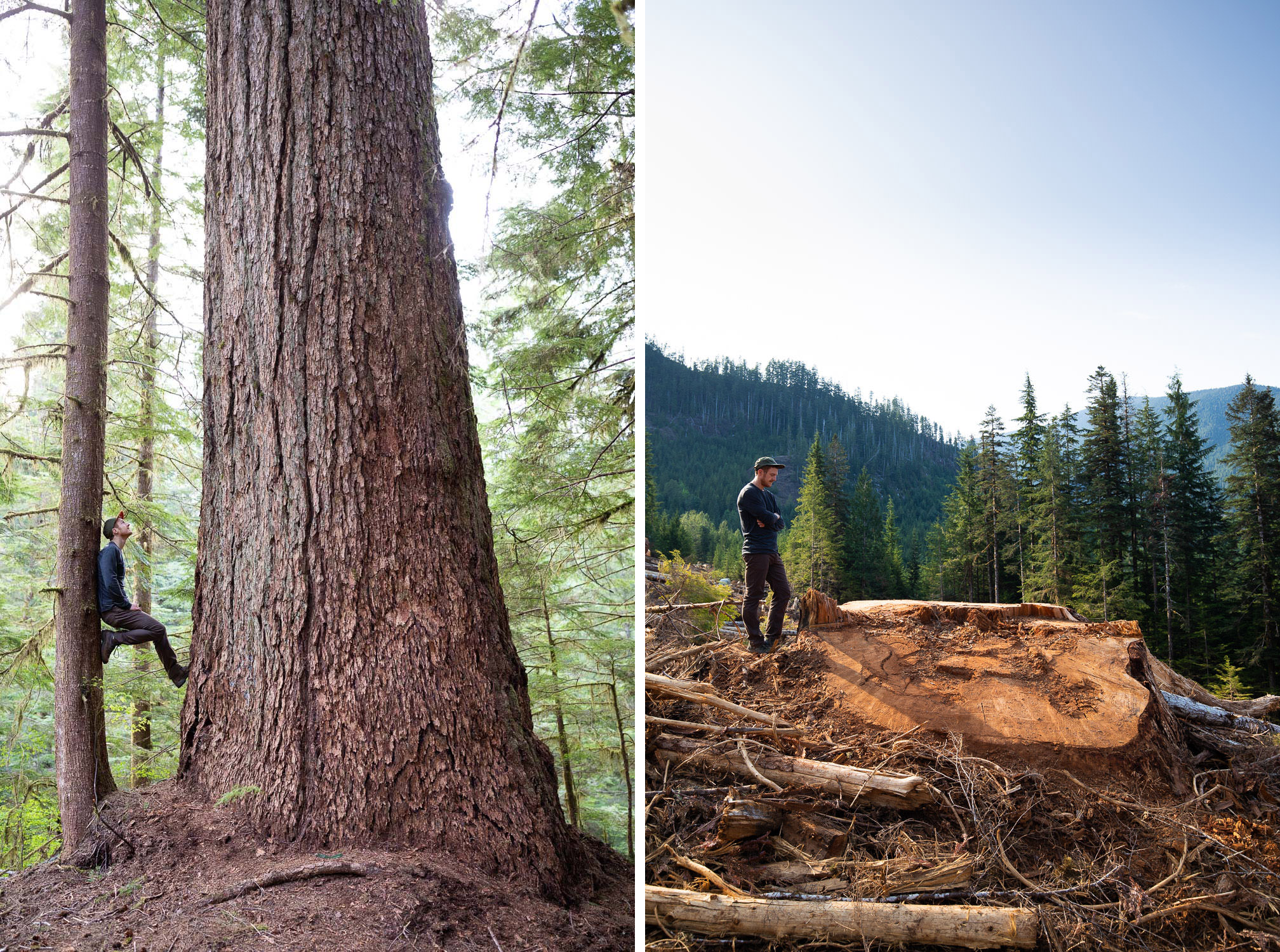 "In May of 2018, while on an Ancient Forest Alliance expedition in the Nahmint Valley, we came across an incredible old-growth Douglas-fir tree measuring 10 feet wide and 216 feet tall, making it the 9th widest Douglas-fir tree in the country according to the BC Big Tree Registry and as tall as Big Lonely Doug. It was a truly beautiful, awe-inspiring tree. Two weeks later, it was a stump. Cut down in one of the many clearcuts auctioned off by the BC government's own logging agency, BC Timber Sales. Under BC's current forestry model, old-growth forests are a non-renewable resource, as forests are re-logged every 50-70 years, never to become old-growth again. Ecological values aside, a record-sized tree like this one, growing on gentle terrain and next to the main road, can form the basis of an industry based on ""big tree tourism"". In this light, trees can be viewed as a renewable resources in that people will come to see them time and time again, generating revenue for local businesses and leaving the forest standing at the same time. However, each time another giant tree or grand grove is cut down, we permanently remove that option from the table. With less than 1% of the original old-growth coastal Douglas-fir trees remaining on BC's coast, it's time for the BC government to create a science-based plan that protects these ancient forests and help create a shift to a sustainable, value-added, second-growth forest industry instead."